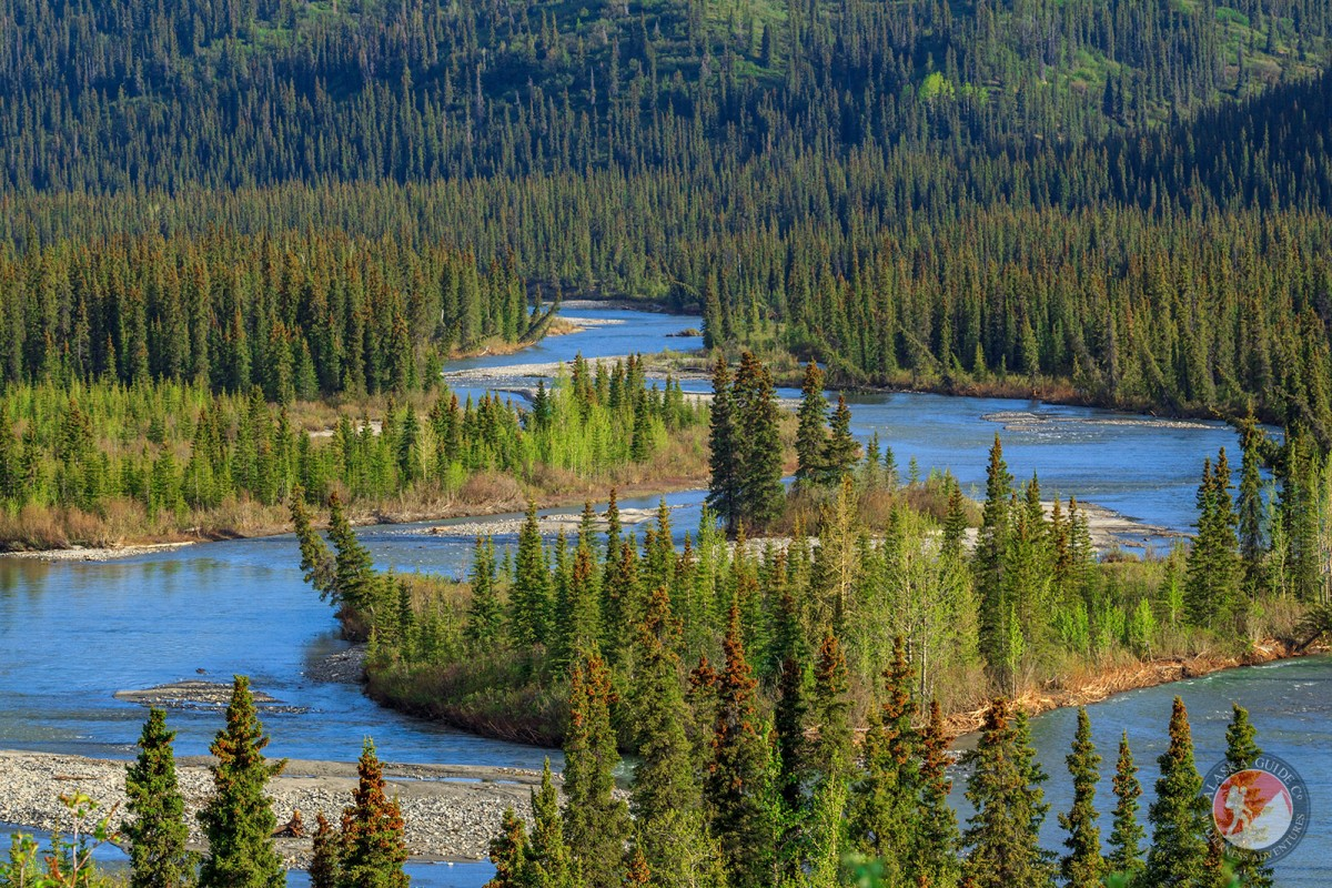 The Nenana River as it flows along the Denali Highway.