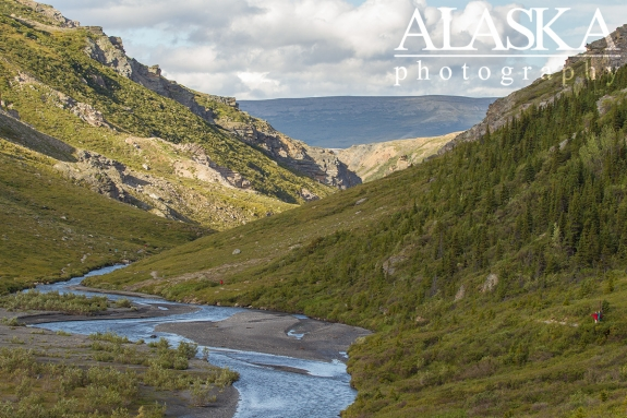 Hikers stop and loop across Savage River while hiking the loop. Bear, moose, and caribou are commonly spotted here.