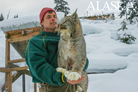 Steve Kroschel shows a lynx at his wildlife park in Haines. Kroschel Wildlife Center